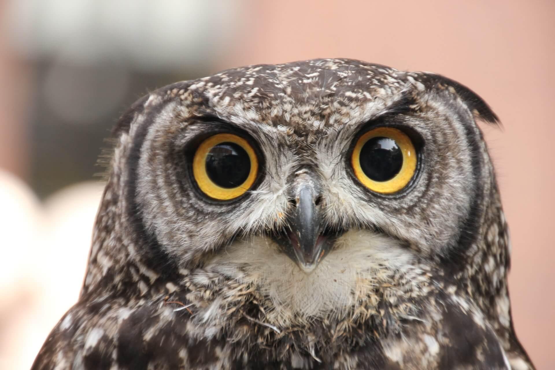 powl(ポール)とは?